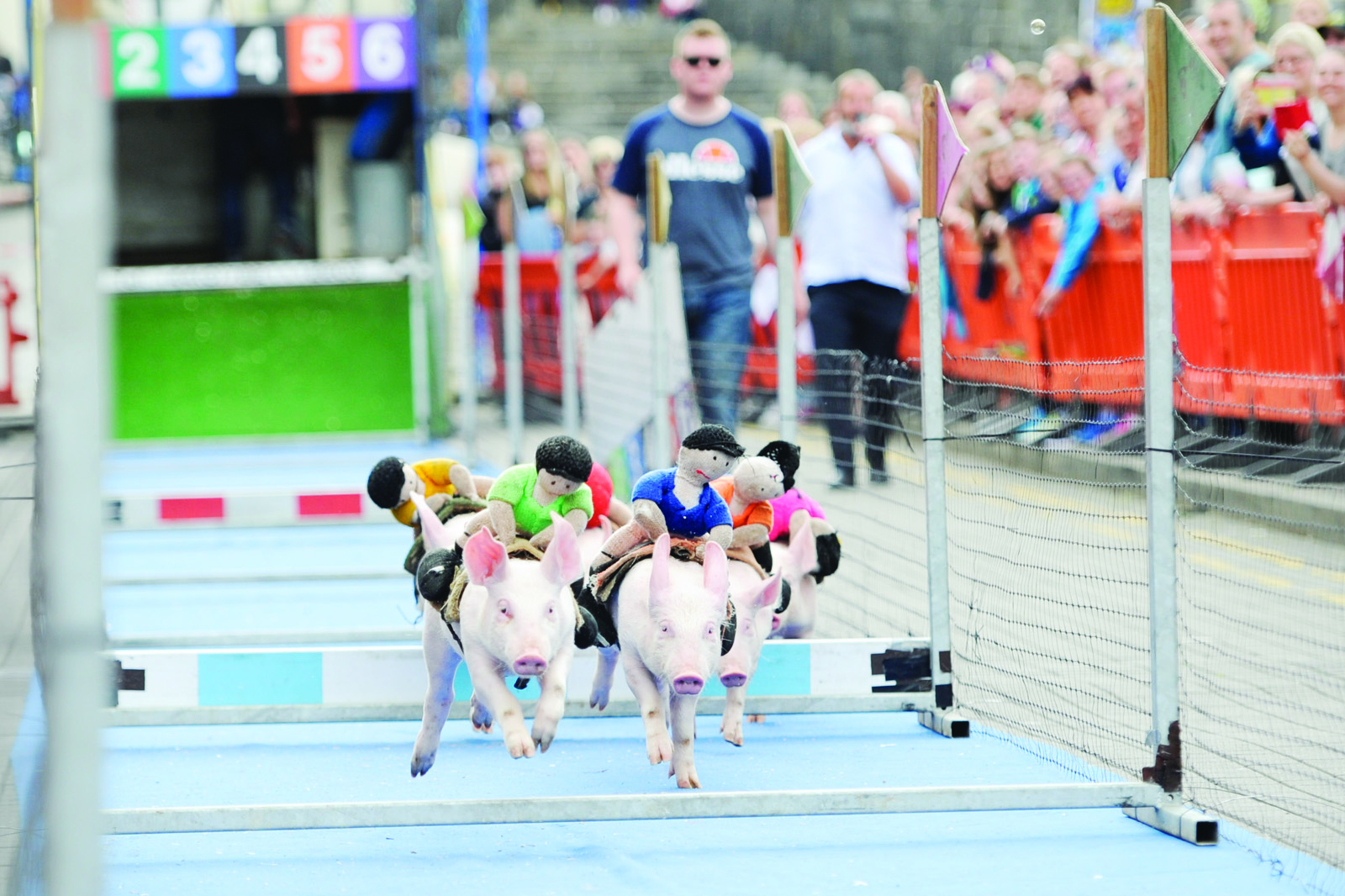 The pigs in action at the pig racing at the Clones Canal Festival. ©Rory Geary/The Northern Standard